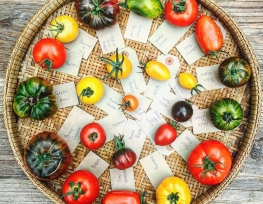 Know your tomatoes…