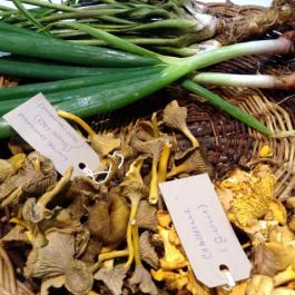 Autumn Foraging with Darina Allen - Ballymaloe Cookery School