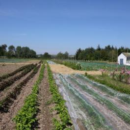 The Vegetable Patch - The Farm Walk - Ballymaloe Cookery School