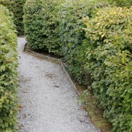 Inside The Celtic Maze - Ballymaloe Cookery School