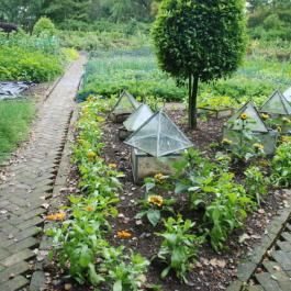 The Kitchen Potager Garden - Ballymaloe Cookery School
