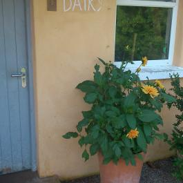 The Dairy, Farm Walk - Ballymaloe Cookery School