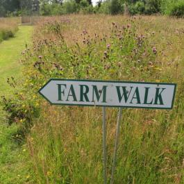 The Farm Walk - Ballymaloe Cookery School