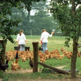 Feeding The Hens - Ballymaloe Cookery School