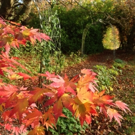 Autumn colour in Lydia's Garden - Ballymaloe Cookery School