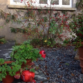 Poppies, Rosehips & Myrtle Berries - Ballymaloe Cookery School