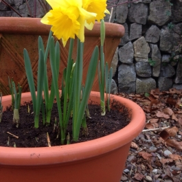 Spring is here! - Ballymaloe Cookery School