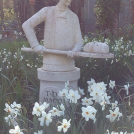 Our resident baker in the Ornamental Fruit Garden surrounded by Narcissi - Ballymaloe Cookery School