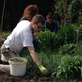 Sonya and gardeners busy with weeding in the herbaceous borders - Ballymaloe Cookery School