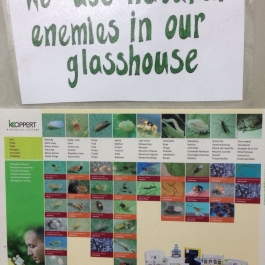 Poster in the glasshouse to show how we manage pest control as part of our organic farm - Ballymaloe Cookery School