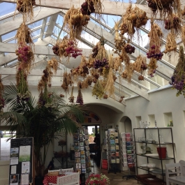 Onions and flowers drying in the conservatory - Ballymaloe Cookery School