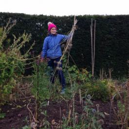 Cutting back perennials in the herbaceous borders - Ballymaloe Cookery School