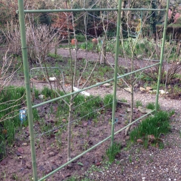 Two year old apple trees (Gibbons russet) will be trained over the arch - Ornamental Fruit Garden - Ballymaloe Cookery School