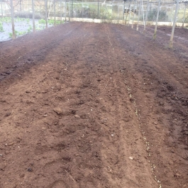 Lots of peas being planted in the glasshouses - Ballymaloe Cookery School