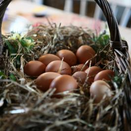 Fresh eggs from Ballymaloe Cookery School Hens
