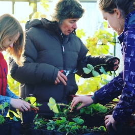Course – Grow your own vegetables