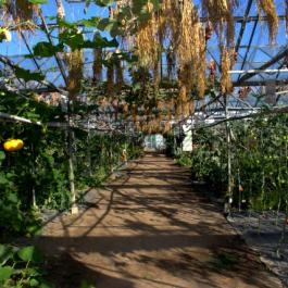 The Glasshouses - The Farm Walk - Ballymaloe Cookery School