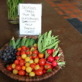 Delicious Things from The Glasshouses - The Farm Walk - Ballymaloe Cookery School