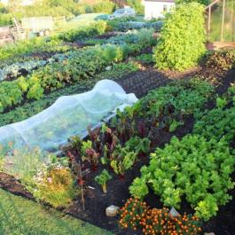 'No Dig for Healthy Abundance and Less Weeds' - Ballymaloe Cookery School