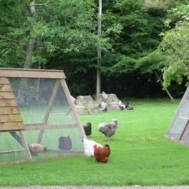 Hen Enclosure - Ballymaloe Cookery School
