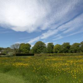 The Wildflower Meadow - Ballymaloe Cookery School
