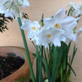 Early Daffodils to bring a smile to our faces.