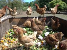 Eliminating Food Waste - Ballymaloe Cookery School
